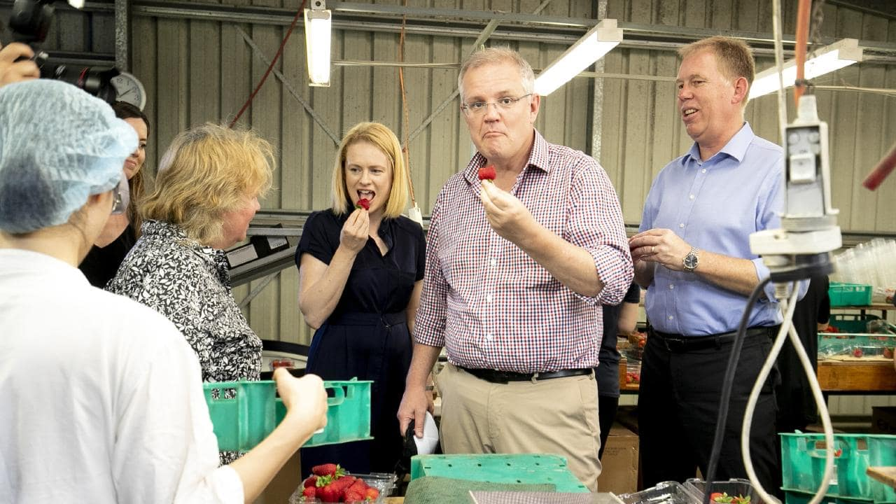 'Backpacker threat' to Pacific farm labour