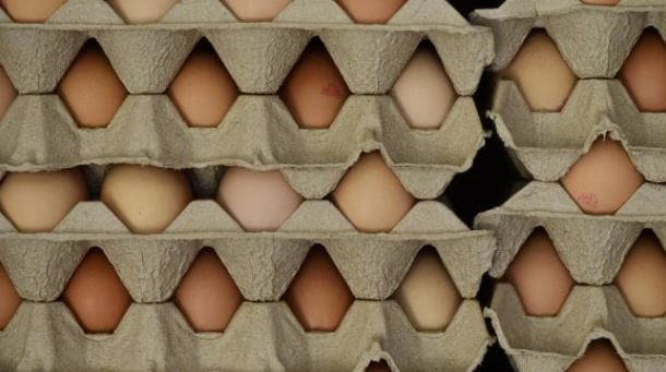 NSW Food Authority issues Salmonella warning for eggs