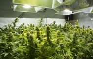 Potential cannabis growers probe industry opportunities