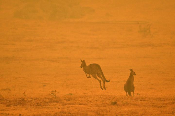 Australia's fires 'killed or harmed three billion animals'