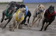 Greyhound trainer disqualified, fined after dog tests positive for meth